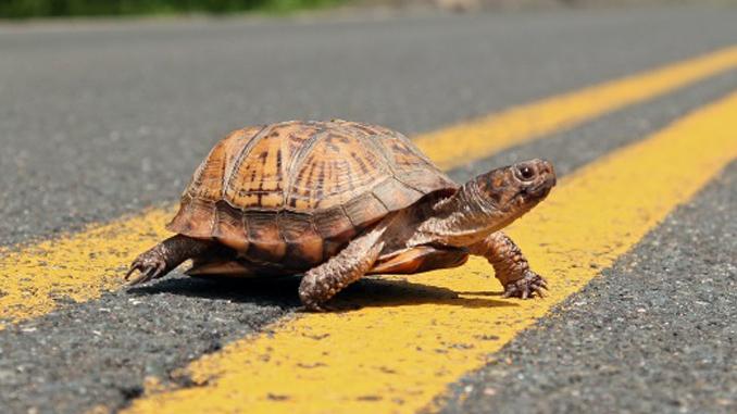 slow turtle | Colorado Peak Politics